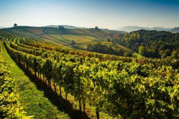 Вальполичелла: дегустация вина