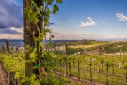 Дегустация вин долины Вальполичелла (фото 1)